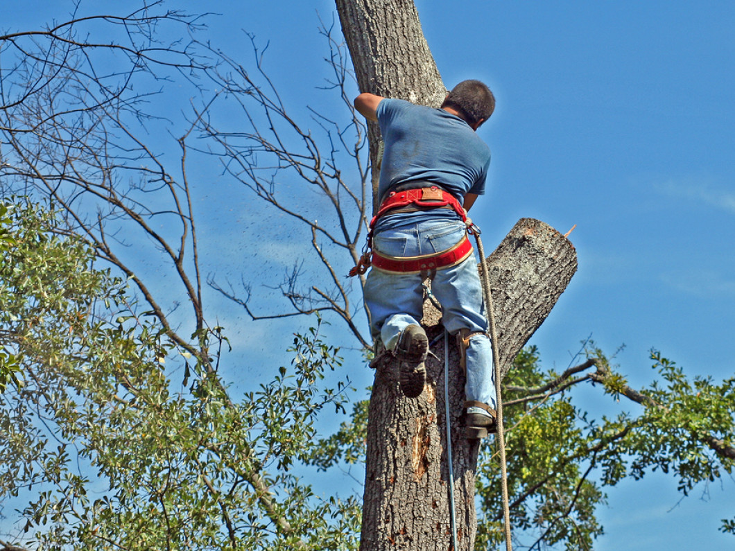 Give Your Trees a Little TLC With Quality Tree Services in Atoka, TN & Beyond