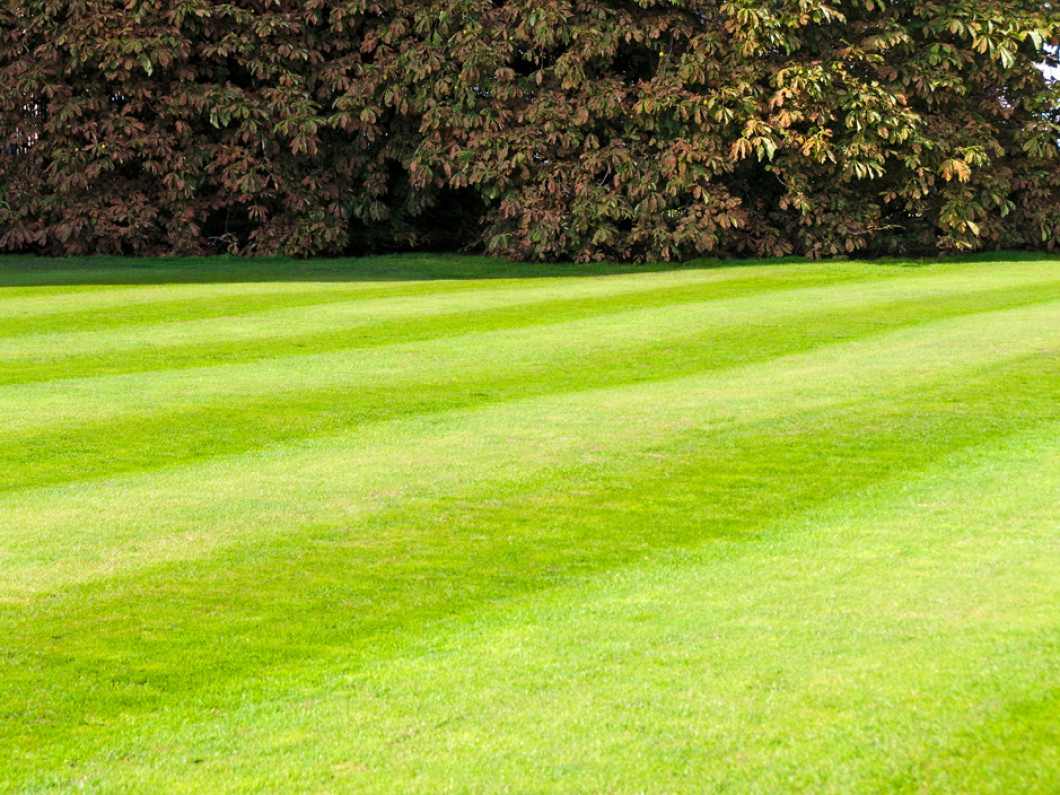 Get a Gorgeous Lawn Without Lifting a Finger